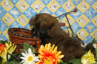 Daisy Puppies Sold At A Reduced Price