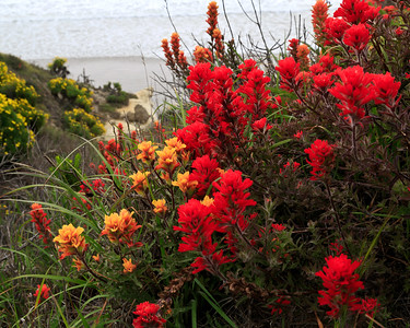 Santa Rosa Island April (entire collection )