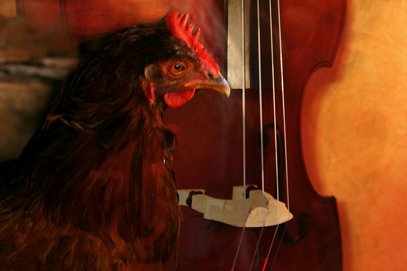 Red Hen and Bass.jpg