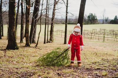Easton {Christmas tree}