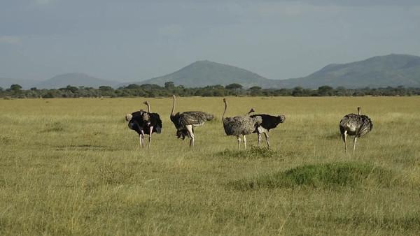 Serengeti Videos