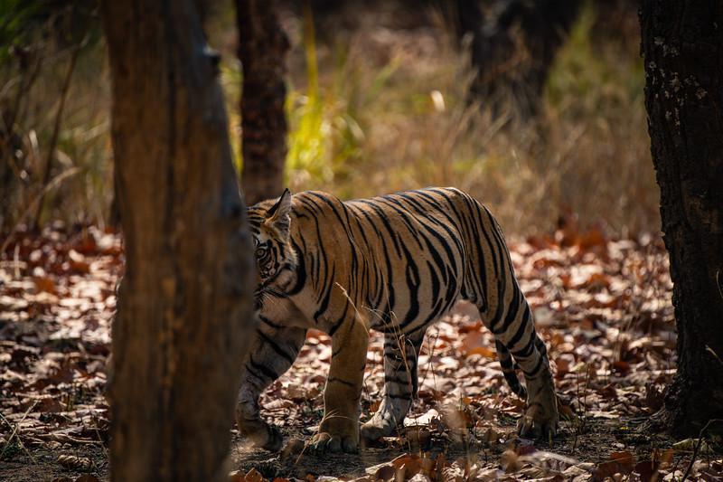 India_April_2019-2431-2.jpg