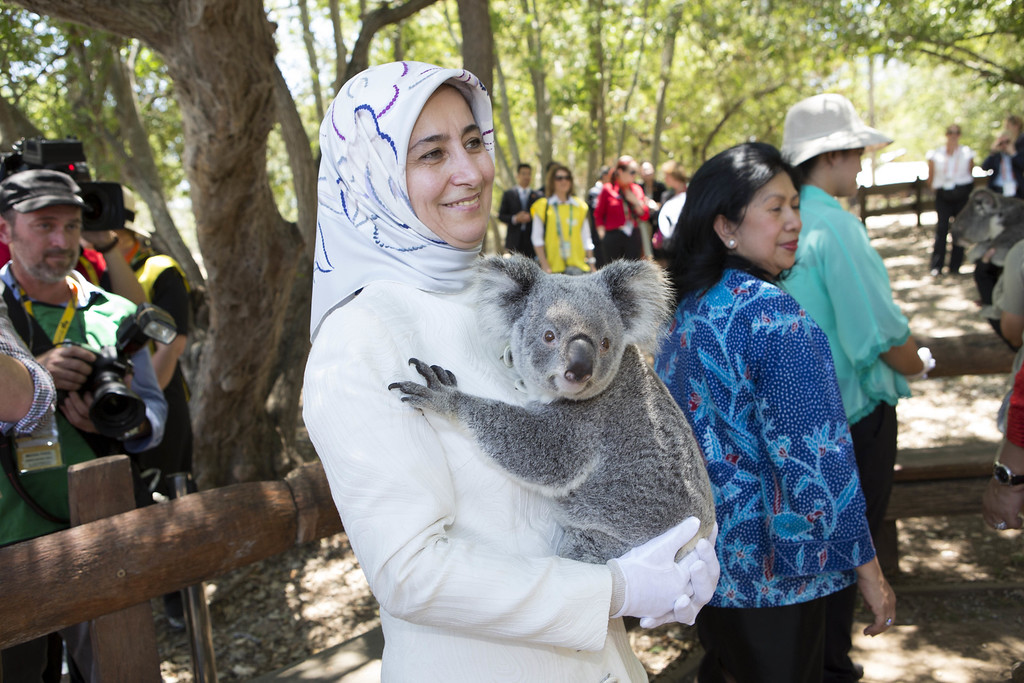 . BRISBANE, AUSTRALIA - NOVEMBER 15:  Sare Davutoglu of Turkey cuddles a koala at the Lone Pine Koala Sanctuary, as part of the G20 Leaders\' Spouse programme on November 15, 2014 in Brisbane, Australia. World leaders have gathered in Brisbane for the annual G20 Summit and are expected to discuss economic growth, free trade and climate change as well as pressing issues including the situation in Ukraine and the Ebola crisis.  (Photo by Penny Bradfield/G20 Australia via Getty Images)