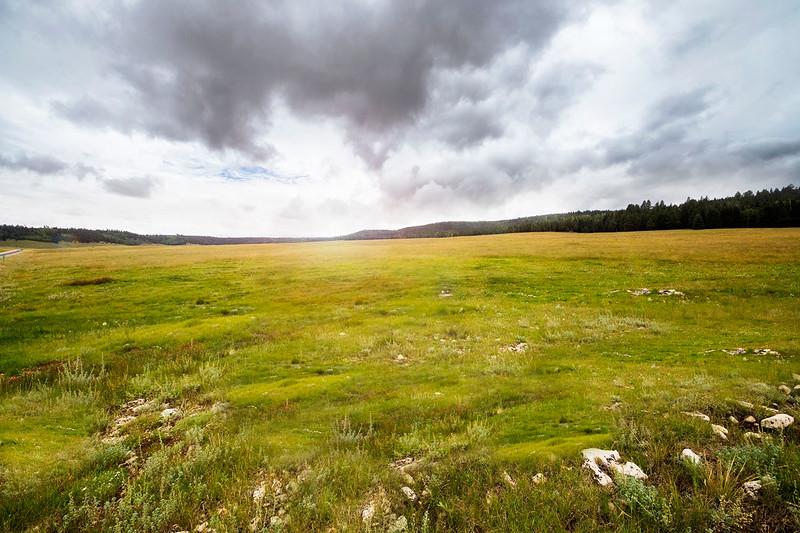 GC fields of grass.jpg