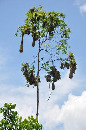 Ecuador Jungle