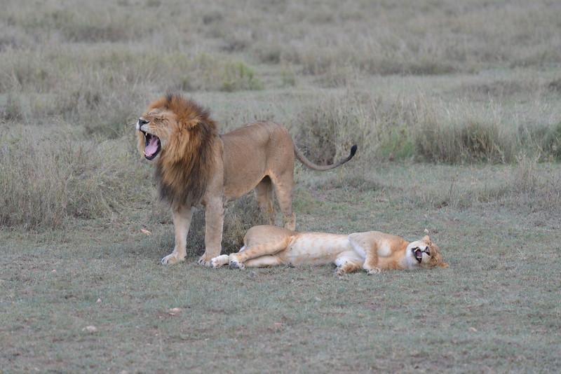 East Africa Safari 287.jpg