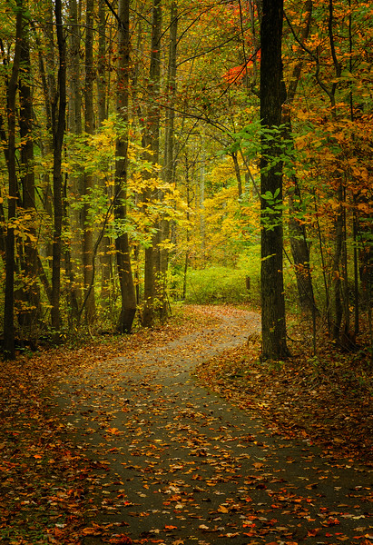Fall Colors and Trail Two.jpg