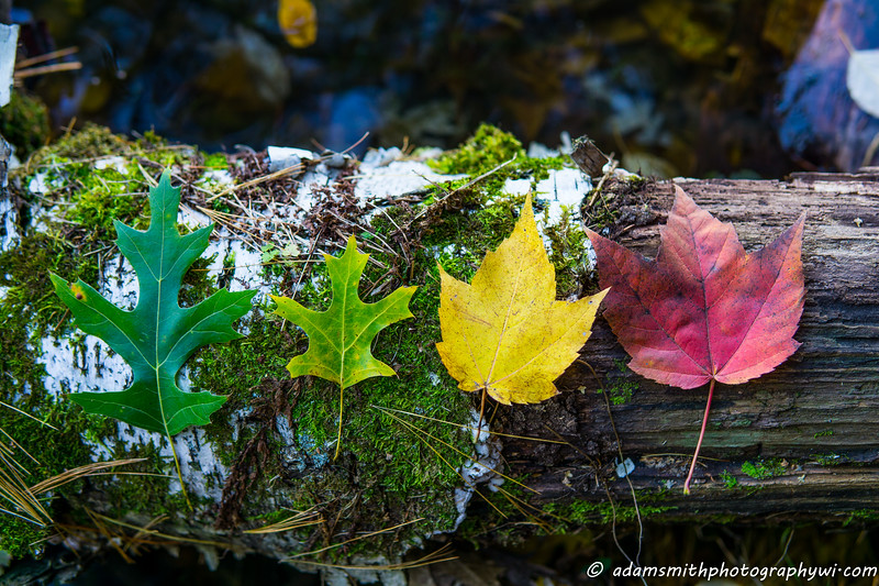 stages_of_Fall-1-2.jpg