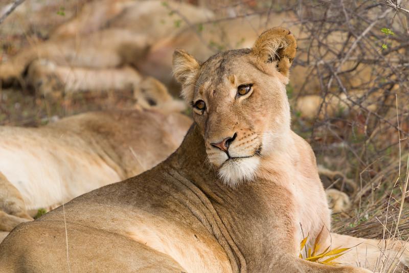 Safari-0319.jpg