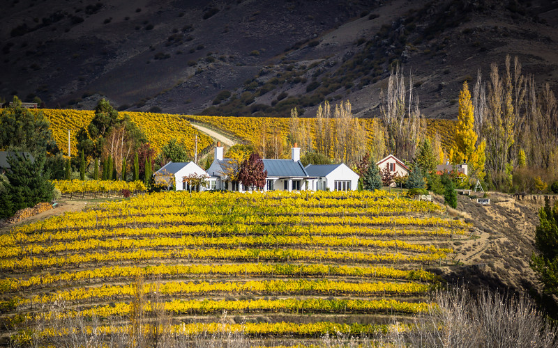 home-in-the-vineyards-central-otagao-new-zealand.jpg
