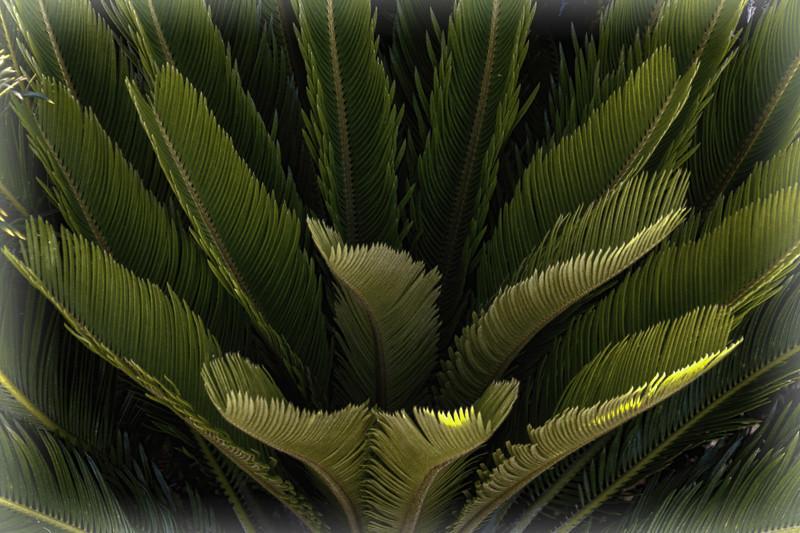 July 31 - Foliage.jpg