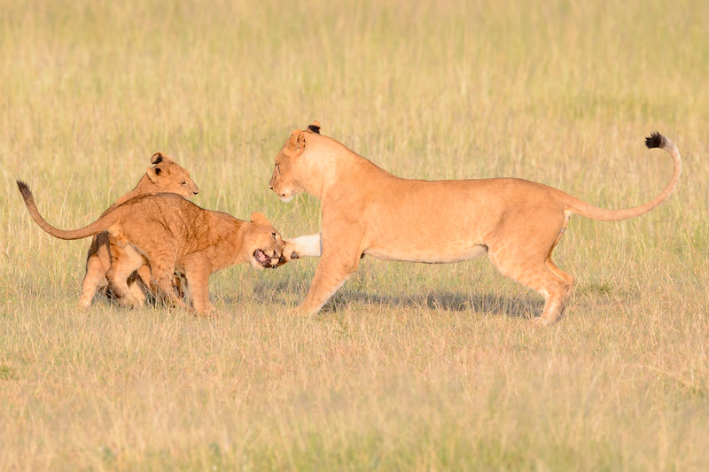 20160215__KET7805_Serengeti_Day_7.jpg