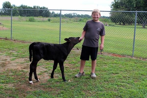 Mason's Cow August 1, 2017