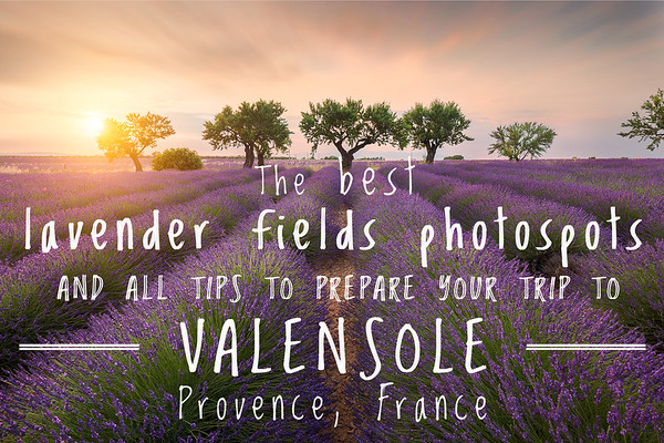 The 8 best photospots to shoot Lavender fields and all you need to know