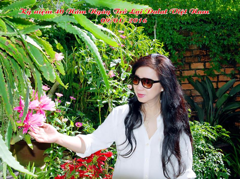 Nhất Anh - vườn hoa của Nguyễn Thị Dung