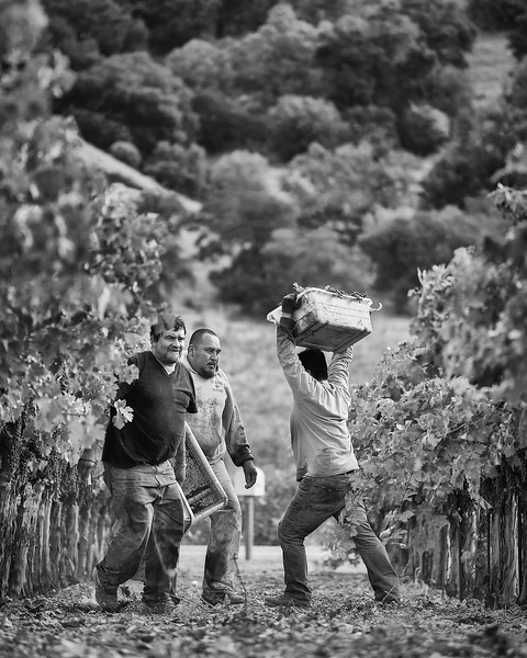 3 Grape Pickers B&W.jpg