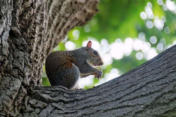 Esquilos (squirrels)