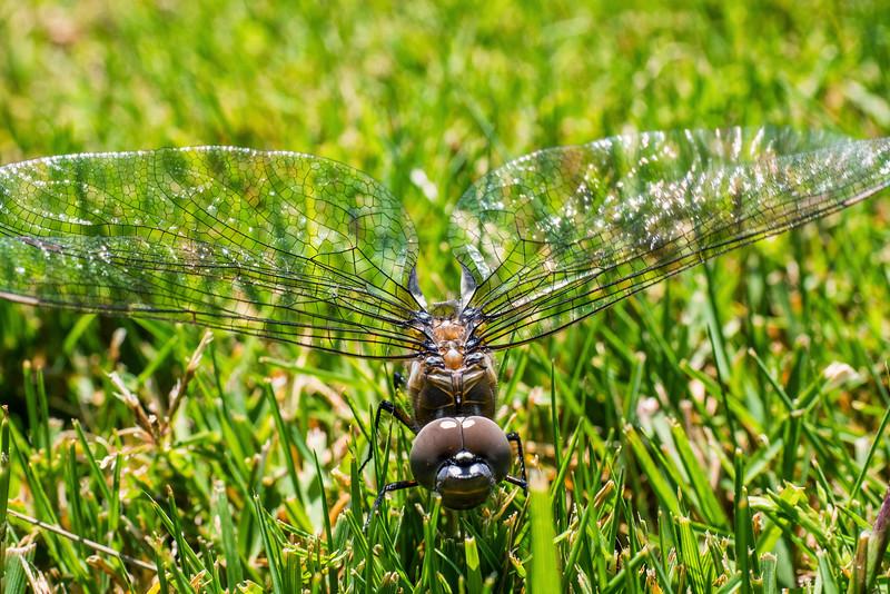 dragonfly?-05.jpg