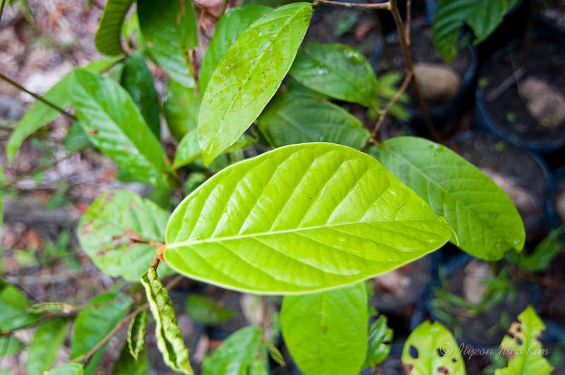 Borneo-Jungle-6734.jpg
