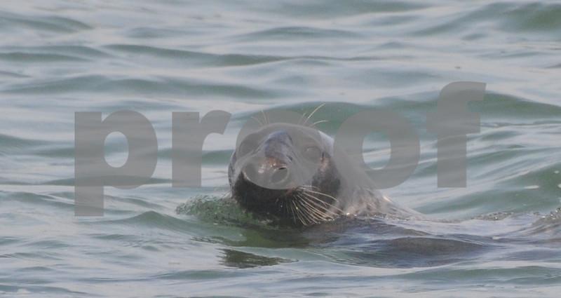 bird,seal,family 023.JPG