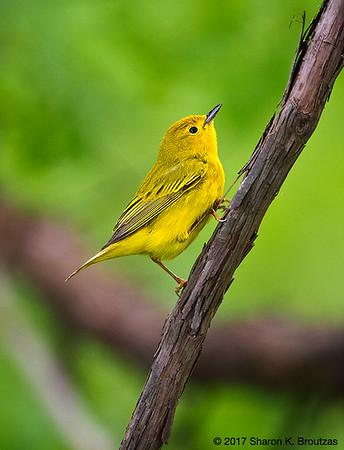 Magee Marsh Ohio Birding