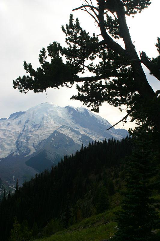 Mt_Ranier_19aug04 038.jpg