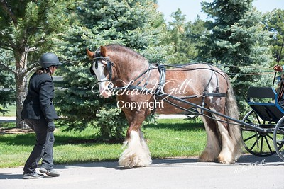 Turnout #4 Draft Horse $35