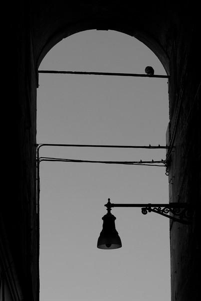 lightpigeonbw.jpg