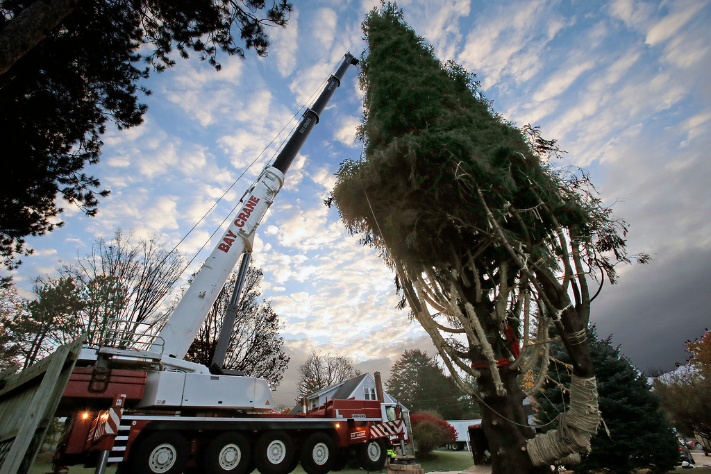 . A crane stands beside this year\'s Rockefeller Center Christmas tree, a 75-foot tall, 50-foot in diameter, Norway Spruce, weighing more than 12 tons, as it is prepared to be cut down in the yard of Jason Perrin in State College, Pa., Thursday, Nov. 9, 2017. The tree was loaded onto a flatbed truck and is en route to to Rockefeller Plaza in New York City. The tree will be put in place on Saturday, Nov. 11, from 8 a.m to 11a.m. in front of 30 Rockefeller Plaza. (AP Photo/Gene J. Puskar)