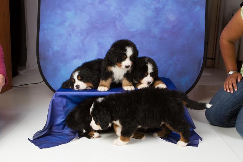 2013-Pearson Pups-Jun02-0327.jpg