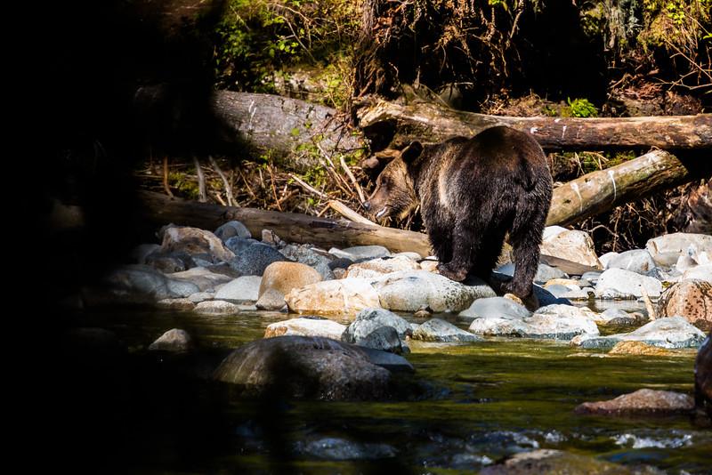 150910_GrizzlyForest_4406.jpg