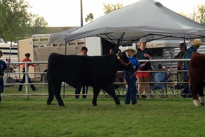 Junior Beef Showmanship Sat
