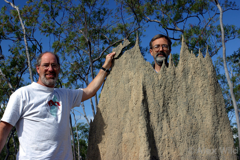 Gary Alpert & Phil Ward having fun with magnetic termites in northern Australia.