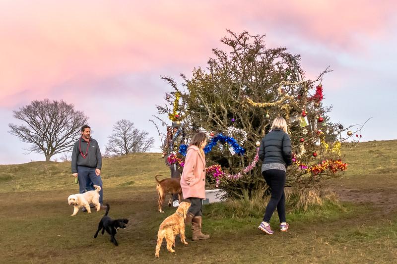Dog's Christmas Tree-7835.jpg