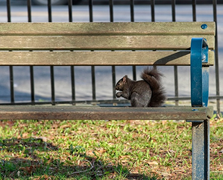 SQUIRREL ON BENCH