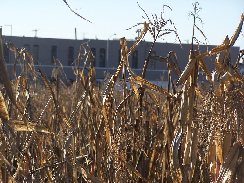 06-01-13_So_Much_Not_Corn-003.jpg