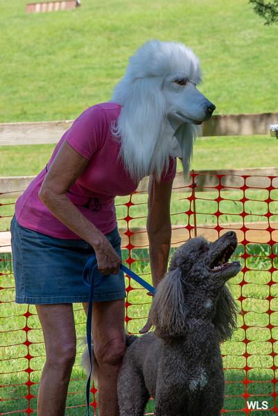 DRHC DOG SHOW 2018