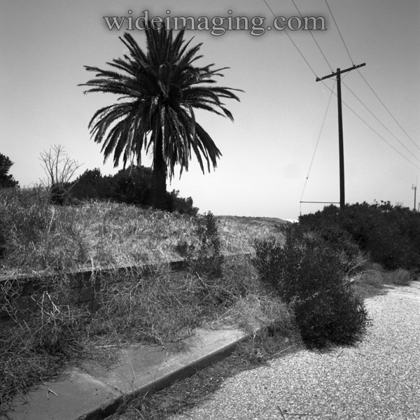 Playa Del Rey, Ghost Town: Trask Avenue near Sterry Street. The property retaining wall remains by a sidewalk that has not been walked on in 40 years.