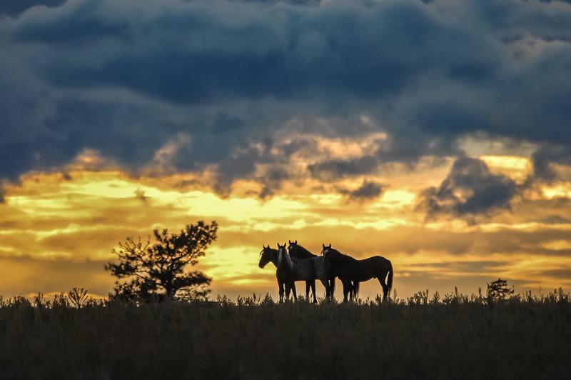 Wild Horses Under Sunset Sky #1