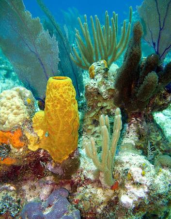 Grand Cayman Scuba
