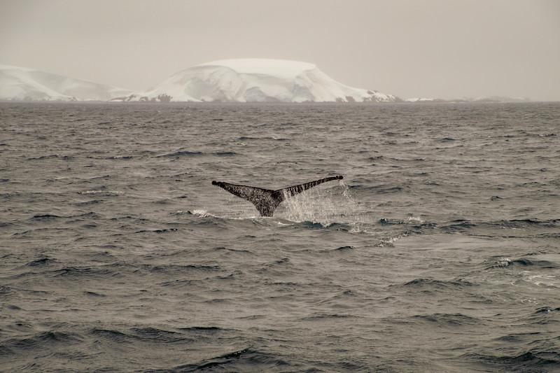 20190121_Whale-watching_9-858.jpg