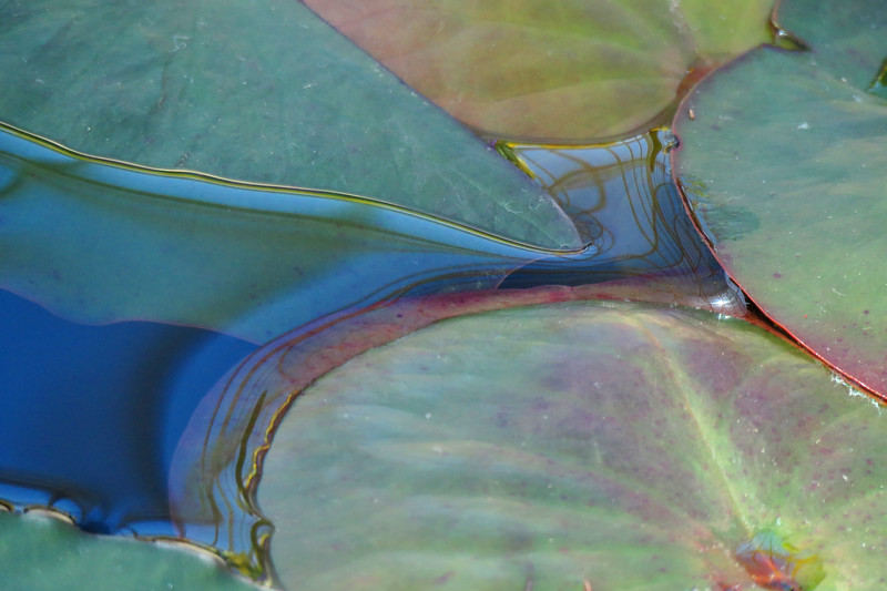 lily pads abstract one.jpg