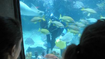Sean NEAQ GOT Dive Videos 2012