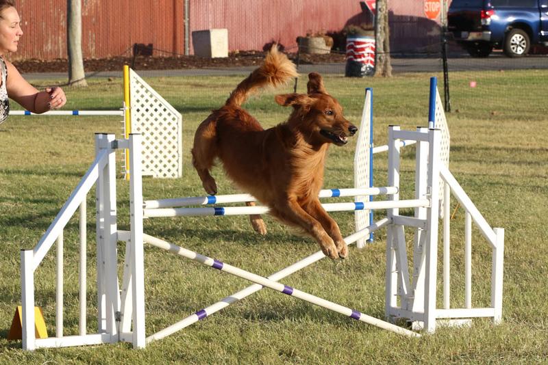 11-4-2018 Border Terrier-2674.jpg