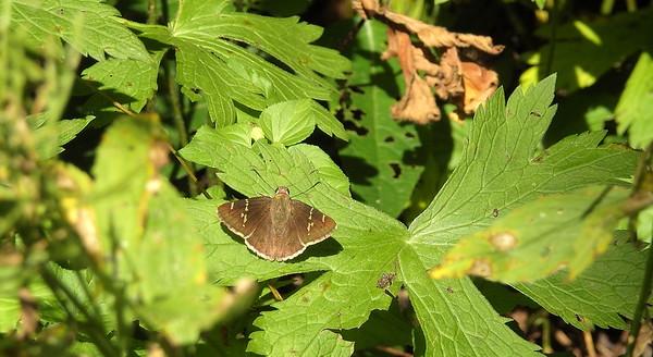 07.13.2019_Shaw Butterfly Walk
