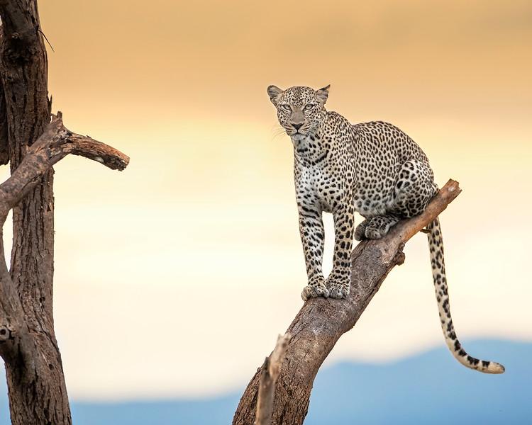 Kenya (1/2020)