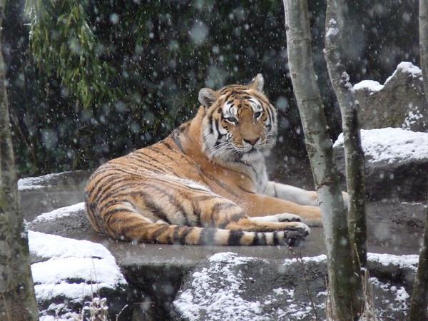 PDX Zoo Feb09