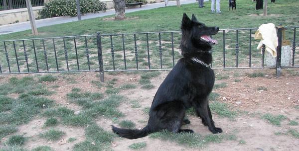 5 -  30 -  2010 Ayora Dog Park