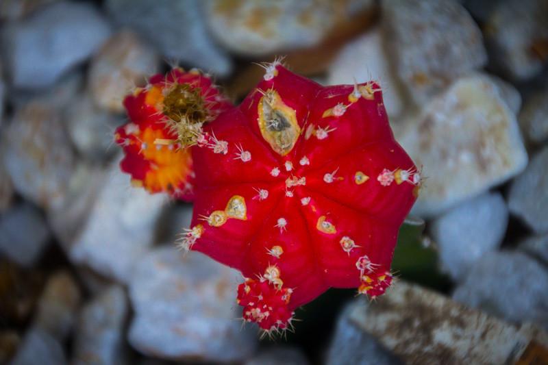 July 29 - Cactus.jpg