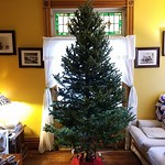 Thumbnail image for This Year's Tree Adventure